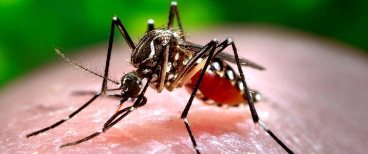 Khởi thủy dẫn tới Muỗi sinh sôi nảy nở nhiều ở nước ta?