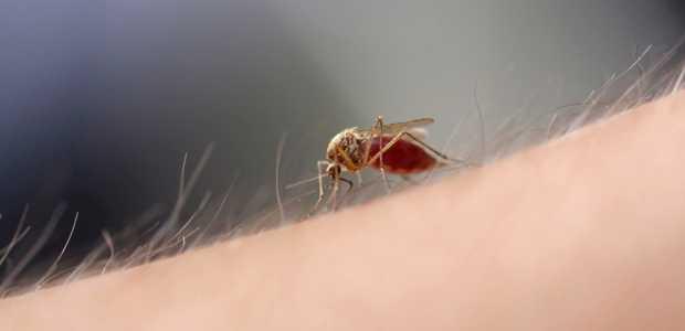 Hãy bảo vệtrẻ bằng cách thức diệt muỗi tận gốc
