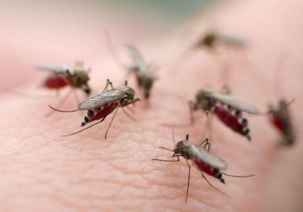 virus Zika tới cơ quan sinh sản của nam giới